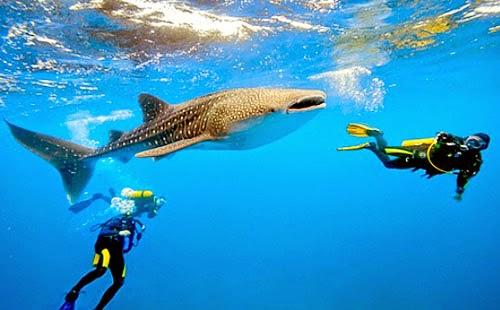 (ดำน้ำดูฉลามวาฬ) ทัวร์เอเชีย ฟิลิปปินส์ เซบู 5 วัน 2 คืน บินฟิลิปปินส์แอร์ไลน์ (PR)