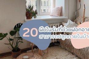 20 พืชในร่มที่ช่วยฟอกอากาศ สามารถปลูกภายในบ้านได้