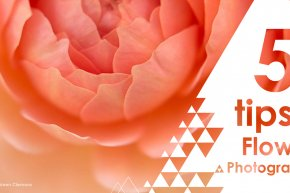 5 TIPS TO FLOWER PHOTOGRAPHY