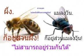 ผึ้งอยู่ส่วนผึ้ง แมลงวันอยู่ส่วนแมลงวัน