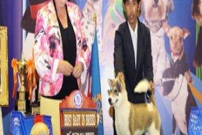 Bangkok Grand Dog Show 2012