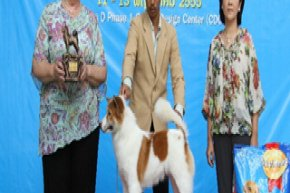 Bangkok FCI International Championship Dog Show 2012
