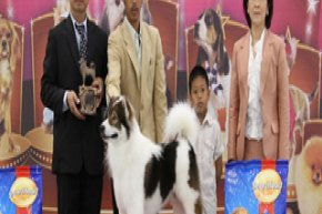 THE MALL TOY DOG CHAMPIONSHIP SHOW 1/2012