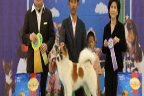 The Mall Championship Dog Show 4/2012