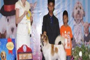 Champion Of Champions Dog Show 2013