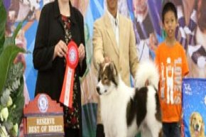 The Mall Toy Dog Championship Dog Show 1/2013