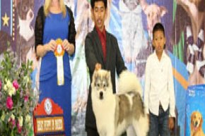 The Mall Toy Dog Championship Dog Show 2/2013