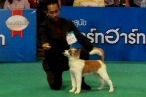 SmartHeart presents Thailand International Dog Show 2013