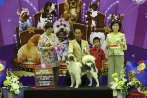 The Mall Toy Dog Championship Dog Show 4/2013