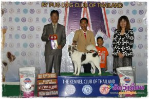 Pantip Pet Expro & National Dog Show 2013
