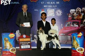 The Mall Toy Dog Championship Dog Show 5/2013