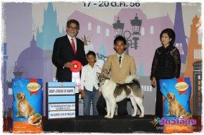 Thai Bangkaew Dog National Dog Show