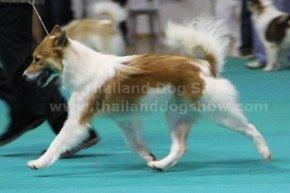 Suphanburi Dog Show 2013