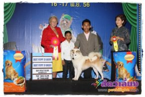 SmartHeart Presents The Mall Toy Dog Championship Dog Show 7/2013