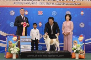 SmartHeart Champion Of Champions Dog Show 2014