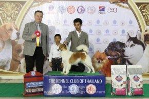 TAWANNA NGAMWONGWAN DOG SHOW 2/2014