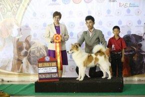 TAWANNA NGAMWONGWAN DOG SHOW 3/2014