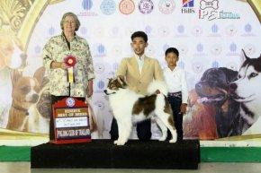 TAWANNA NGAMWONGWAN DOG SHOW 4/2014
