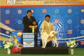 Bangkok FCI International Championship Dog Show 2014