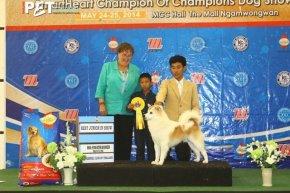 Bangkok FCI International Championship Dog Show 2014