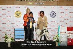 ROYAL CANIN INTERNATIONAL DOG SHOW 2014