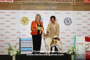 ROYAL CANIN INTERNATIONAL DOG SHOW 2014