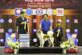 SmartHeart Presents The Mall Toy Championship Dog Show 7/2014