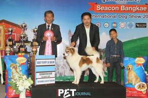 Seacon Bangkae International Dog Show 2014