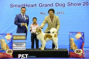 Bangkok FCI International Championship Dog Show 2015