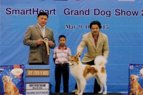 Bangkok FCI International Championship Dog Show 2015