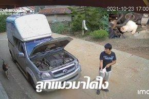 หนุ่มด่านซ้ายตกใจเปิดฝากระโปรงรถกระบะเจอลูกแมวร้องเหมียวๆ (คลิป)