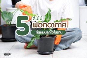 5 ต้นไม้ฟอกอากาศที่นิยมปลูกประดับไว้ในบ้าน