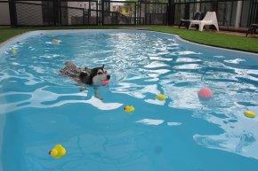 Dog pool & swimming