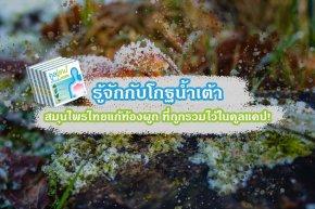 รู้จักกับโกฐน้ำเต้า สมุนไพรไทยแก้ท้องผูก ที่ถูกรวมไว้ในคูลแคป!