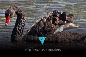หวย และเหตุการณ์ Black Swan