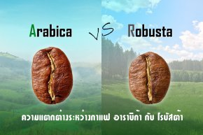 Arabica VS Robusta ความแตกต่างที่น่าค้นหา