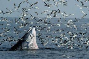 ดูปลาวาฬ ชมฝูงนก ลานตากับหิ่งห้อย ที่เพชรบุรี