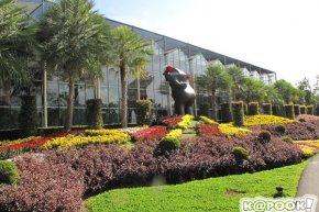 เที่ยว ดาษดา ดินแดนดอกไม้สวยงาม แห่ง ปราจีนบุรี