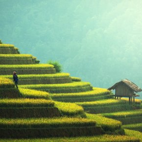 Terraced Rice Fields, Chiangmai
