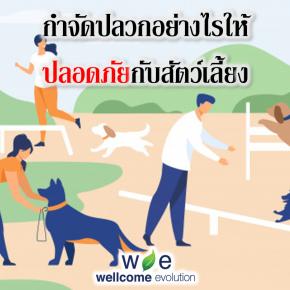 กำจัดปลวกอย่างไรให้ปลอดภัยกับสัตว์เลี้ยง