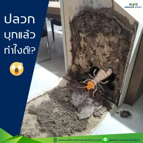 Termites in the house. What to do? 3 ways to deal with termite infestation;
