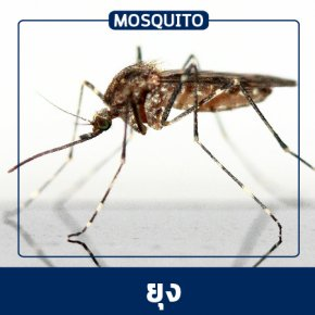 Pest Control & Protection Services :: Mosquito