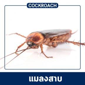 งานบริการควบคุม ป้องกัน และกำจัดแมลงสาบ