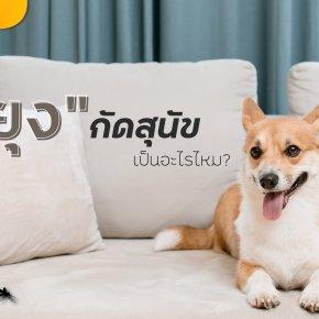 'ยุง' กัดสุนัข เป็นอะไรไหม?