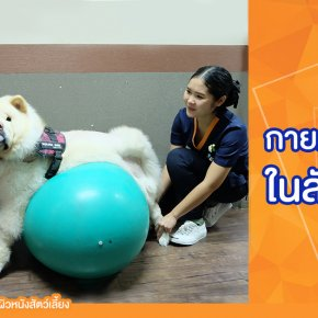 การทำกายภาพบำบัดในสัตว์เลี้ยง สุนัข และแมว (Pet Rehabilitation) :