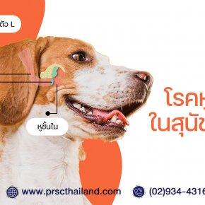 """""""เกาหู หูเหม็น ขี้หูดำ หูบวม"""" ปัญหาหูๆ ของสุนัขและแมว ที่ไม่หมูนัก"""