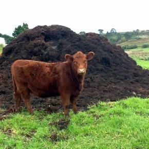 เกษตรอินทรีย์ คืออะไร? อธิบายง่ายๆ ตามความเข้าใจ