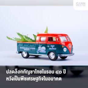 ปลดล็อกกัญชาไทยในรอบ ๔๐ ปี หวังเป็นพืชเศรษฐกิจในอนาคต
