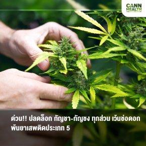ด่วน!! ปลดล็อก กัญชา-กัญชง ทุกส่วน เว้นช่อดอก พ้นยาเสพติดประเภท 5
