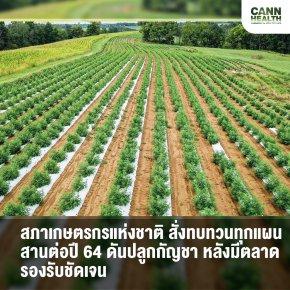 สภาเกษตรกรแห่งชาติ สั่งทบทวนทุกแผนสานต่อปี 64 ดันปลูกกัญชา หลังมีตลาดรองรับชัดเจน